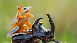 あなたは、これほど楽しそうなカエルを見たことがあるだろうか(画像)