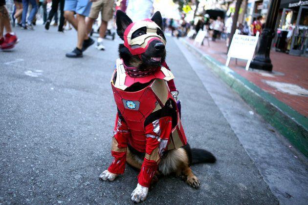 「アイアンマン」のコスプレをする犬