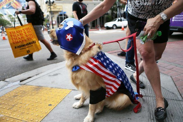 「キャプテン・アメリカ」のコスプレをする犬