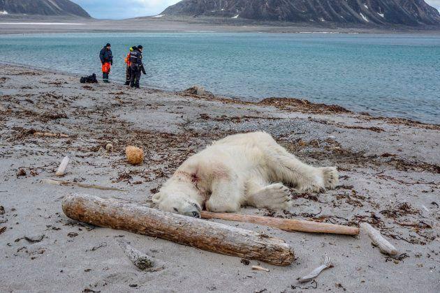 野生のシロクマを銃殺、観光船に非難の声