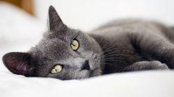 ネコにまつわる処世術