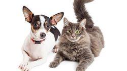 「ペットショップで販売できるのは、保護された猫や犬だけ」サンフランシスコで、新条例が可決される