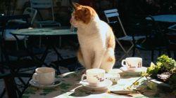パリの「猫カフェ」計画に動物愛護活動家が抗議