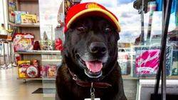 捨て犬だったワンちゃん、ガソリンスタンドの店員になって大活躍(画像)