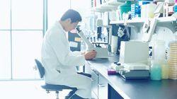 学習能力の発達を調節する遺伝子とタンパク質を、日本の研究グループが発見