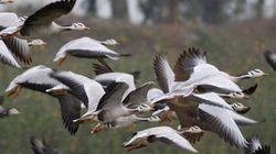 10万羽の水鳥が舞う、黄海に残された渡り鳥の楽園を守る