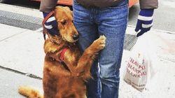 ハグしてくれるワンちゃん、ニューヨークで大人気❤️(画像)