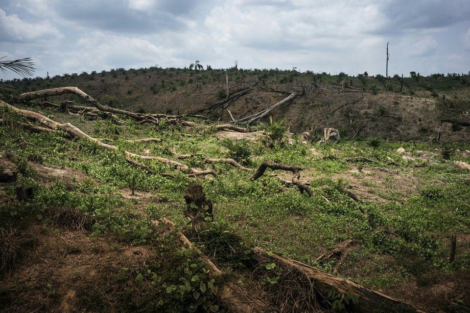 リベリア北部、ロファ郡のアブラヤシ農園で進む森林破壊。ロファ郡は世界でも有数の生物多様性に富んだ地域だ。