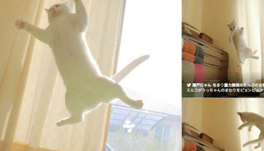 猫のミルコは重力無視だよ。ぴょんぴょん、飛びます!