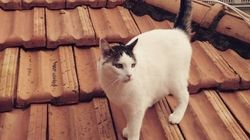 世界中の誰もが、やっぱり猫が好き。〜レンズの向こう側【画像】