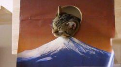 新年にふさわしい猫、初日の出っぽく富士山の上へ出る