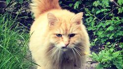 「盗まれたインスタ猫」が無事、飼い主のもとに 容疑者逮捕で2カ月ぶりに帰宅