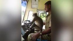 サルでも運転できる?