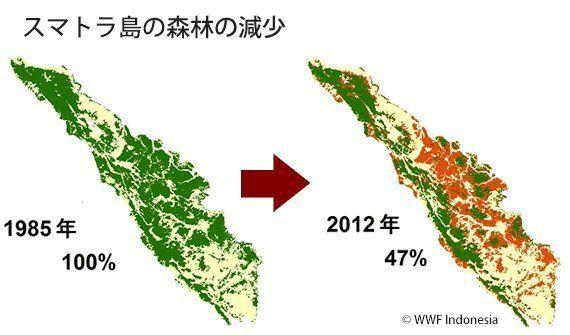 誓約は守られるか APP社による「森林再生と保全支援」に多くの疑問