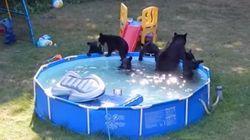 クマの親子が楽しそうにプール遊びしてる!
