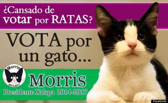 猫のモリスが市長選に立候補?