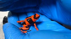 密輸されかけた216匹の毒ガエルを救出。コロンビアの空港のトイレで