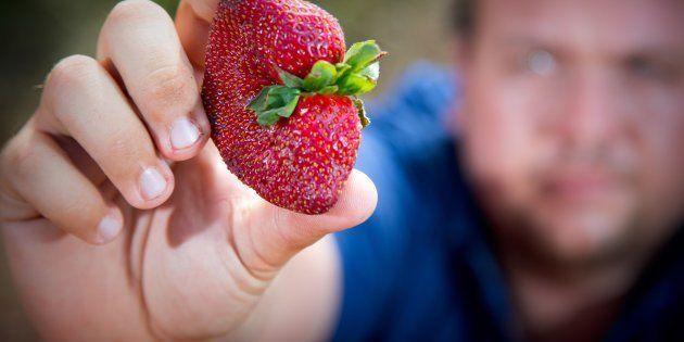 育てたイチゴを掲げる、オーストラリアのイチゴ農家の男性