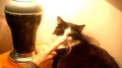 猫の鼻はタッチセンサーライトのスイッチになる