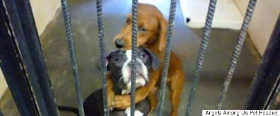 床下で1年以上...亡くなった飼い主を待ち続けたプードルに起こった奇跡(動画)