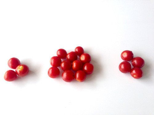 【15分で自由研究♪】甘〜い「ミニトマト」を見分けられるかな?