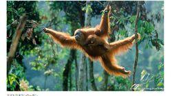 インドネシアの煙害(ヘイズ)問題、乾季に多発する泥炭火災について