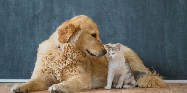 繁殖された犬・猫・ウサギ、ペットショップで販売禁止に カリフォルニア州が2019年から
