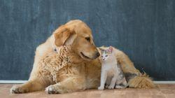 ペットショップで繁殖された犬・猫・ウサギの販売が禁止に カリフォルニア州が2019年から