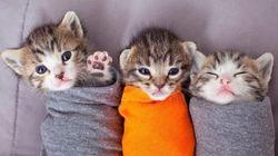 「子猫保育園」で猫の赤ちゃんを抱っこするボランティアをしてみませんか?(動画)
