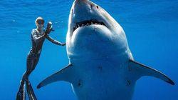 巨大ホホジロザメ、ハワイ沖で目撃される(動画)