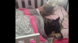 犬を探し回ったの。赤ちゃんとベッドで眠っていたの。(動画)