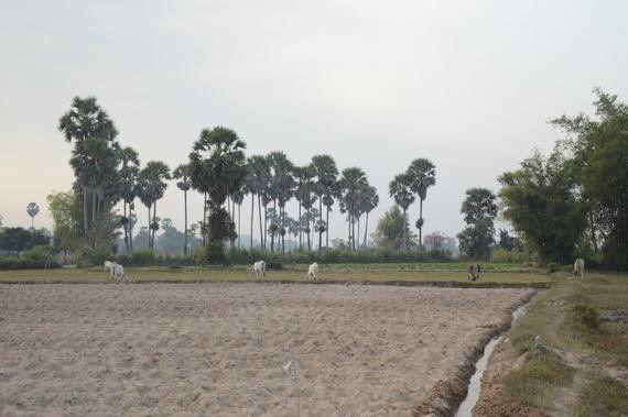 カンボジアの宝ものを世界に広めたい 「ここにあるもの」を自然な方法で育てる意味