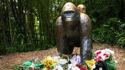 シンシナティ動物園のゴリラが射殺された事件に関して