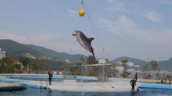 イルカ安住の地は? 和歌山・太地町「追い込み漁」で捕獲され、韓国からトルコへ売られる5匹の運命