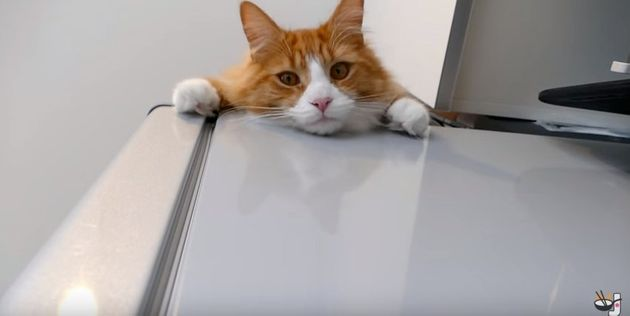 全部、猫のせい。オムライスの作りかたが覚えられないよ...(動画)