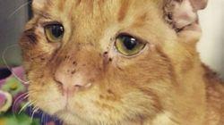 世界一悲しそうな顔をした猫、安楽死の危機から救われる