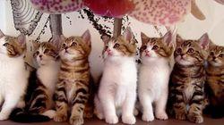 7匹の子猫がシンクロするなんて。ああもう可愛すぎる(動画)