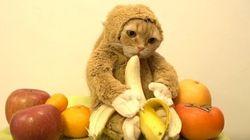 猫なの? 猿なの?