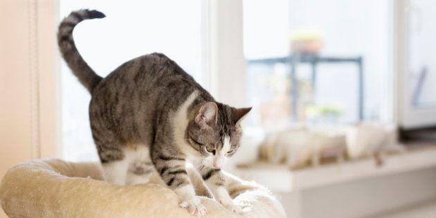 フミフミする猫は、○○だけ。その理由とは...