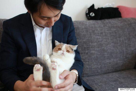 猫ちゃん抱っこしても大丈夫。「毛取り」してくれる宅配クリーニング屋さん見つけた
