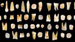 8万年以上前の「人類の歯」。中国で考古学を塗り替える発見か?