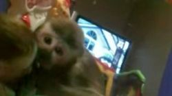 サルは初めて鏡を見た。その瞬間......(動画)