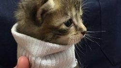 セーターを着た子猫、ハリケーンを生き延びて新しい家族をみつける(画像)