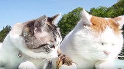猫、カタツムリをツンツンする。シュールです(動画)