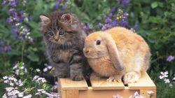 猫とウサギ、その特別な関係に、ドキドキしちゃう【動画】