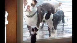 「ボクも一緒に遊びたいよ」パパとママにせがむ子犬がかわいすぎる【動画】