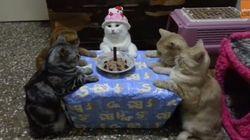 猫たちの誕生日パーティーが不思議すぎる(動画)