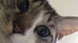 猫が自撮りをしたらこうなった(画像)