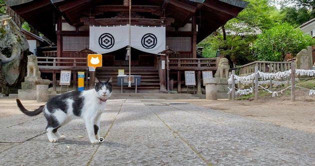 猫が、尾道を案内するとこうなるよ。(動画)