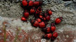 チェルノブイリ:28年後の動植物調査【動画】